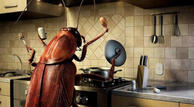 Какво за черните мустакатковци – хлебарките